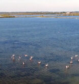 Parco Regionale Delta Po